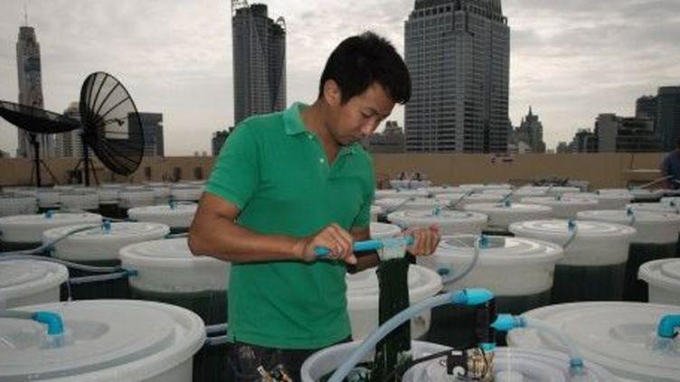 Culture de spiruline sur un toit d'immeuble à Bangkok. 24 juin 2013. (AFP)