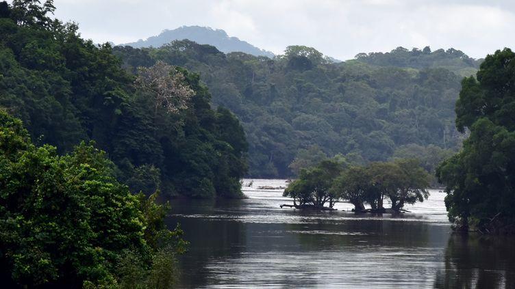 Dans la forêt gabonaise sur le fleuve Ogooué, près de la ville deNdjolé (nord-ouest du Gabon), le 14 janvier 2017... (ISSOUF SANOGO / AFP)