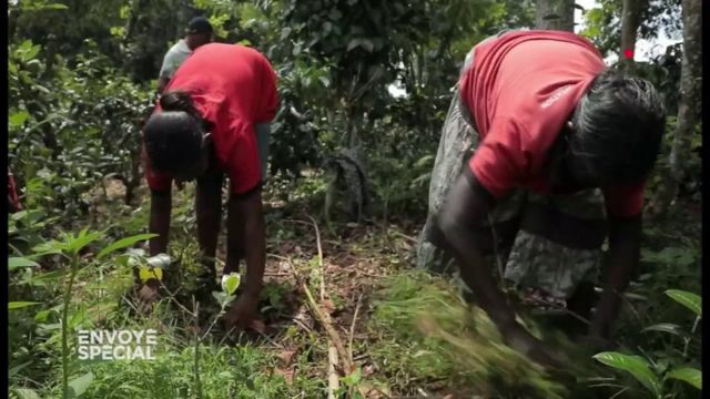 """Envoyé spécial. """"Si on utilisait du glyphosate, ça nous coûterait dix fois moins cher"""" : comment ces paysans sri-lankais contournent l'interdiction de l'herbicide"""