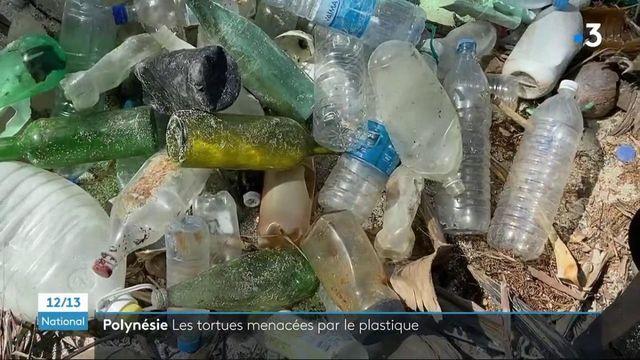 Polynésie : les déchets plastiques menacent l'avenir des tortues marines
