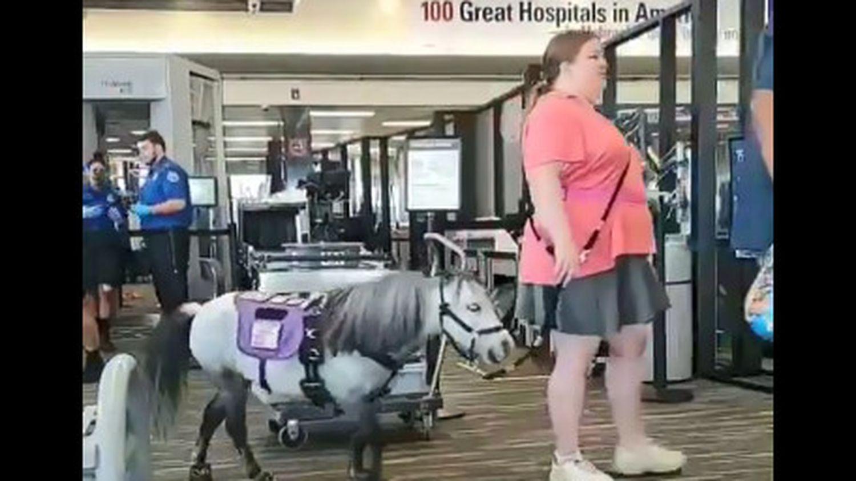 converser avec son cheval