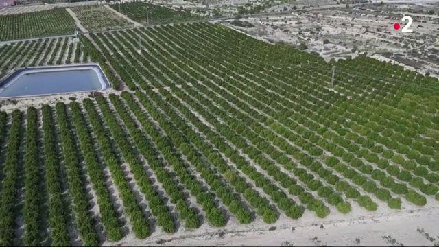 Sécheresse : les fruits et légumes menacés en Espagne