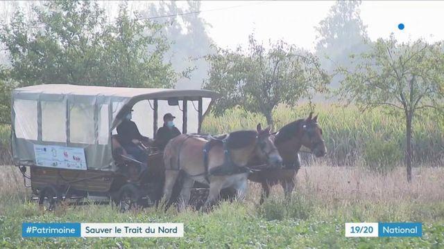 Nord : une calèche scolaire pour sauver le cheval Trait du Nord