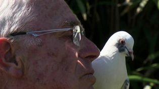 Côtes-d'Armor : la touchante amitié entre un retraité et un pigeon (France 3)