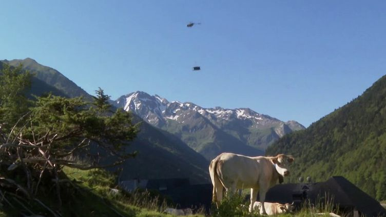 Dans les Pyrénées, les éleveurs béarnais préparent les estives de leurs troupeaux. (France 3)
