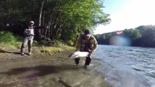 """Le saumon devient une ressource de plus en plus rare dans nos rivières. Pour sauver cette espèce, la mode est au """"no kill"""". Le saumon est systématiquement relâché. (FRANCE 3)"""