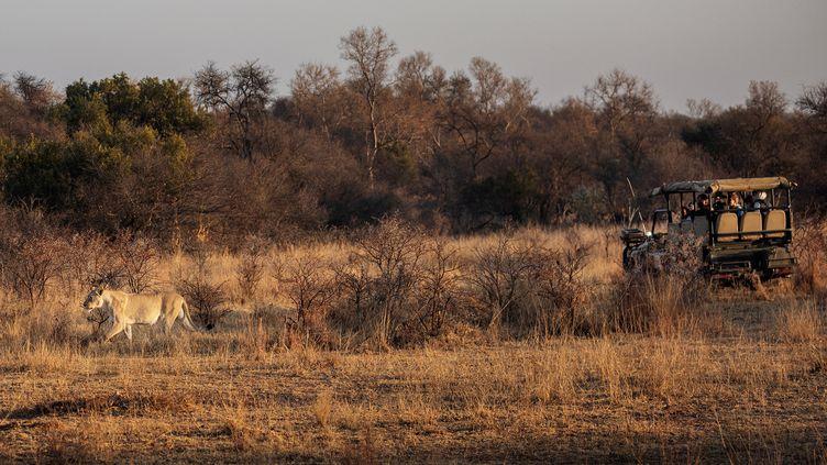 Dansla réserve animalière de Dinokeng, province de Gauteng, Afrique du Sud, le 7 août 2020. (MICHELE SPATARI / AFP)