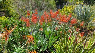 Dans la zone du jardin consacrée à la flore sud-africaine. (ISABELLE MORAND / DR / RADIO FRANCE / FRANCE INFO)