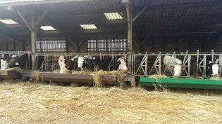 Dans cette exploitation de Monthou-sur-Bièvre (Loir-et-Cher), photographié ici en février 2017, les vaches laitières sont nourries aux céréales et aux herbes sans glyphosate (RADIO FRANCE / ANNE-LAURE BARRAL)