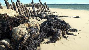 """Des filets de pêcheurs englués par des nappes d'hydrocarbures en provenance des cuves de l'épave du """"Prestige"""", le 4 janvier 2003, sur la plage de la pointe du Cap Ferret (Gironde). (DERRICK CEYRAC / AFP)"""
