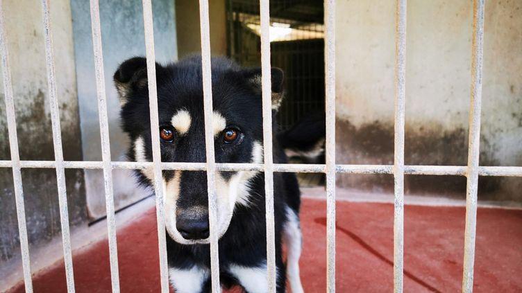 Les chiens font partie des animaux les plus abandonnés par les Français. (RÉBECCA-ALEXIE LANGARD / FRANCE-BLEU LIMOUSIN)