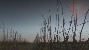 vin français taxes (FRANCEINFO)