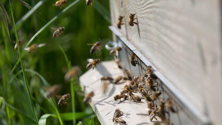 L'hiver 2018 a été particulièrement meurtrier pour les abeilles (illustration). (NICOLAS KOVARIK / MAXPPP)