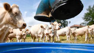 Les éleveurs et les agriculteurssouffrent de la sécheresse (photo d'illustration). (SALESSE FLORIAN / MAXPPP)