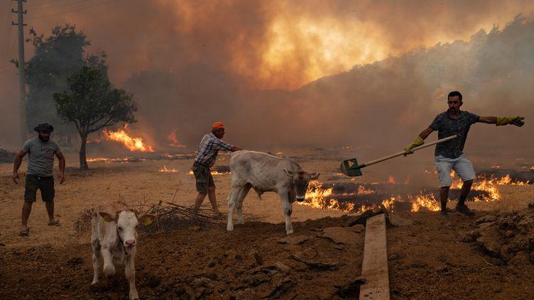 Des hommes rassemblent leurs animaux pour fuirles incendies à Mugla (Turquie), le 2 août 2021. (YASIN AKGUL / AFP)