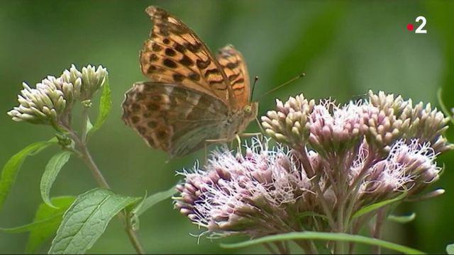 Environnement : les insectes en voie d'extinction ?