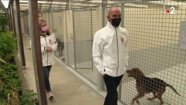 Maltraitance animale : les associations souhaitent un renforcement de la loi