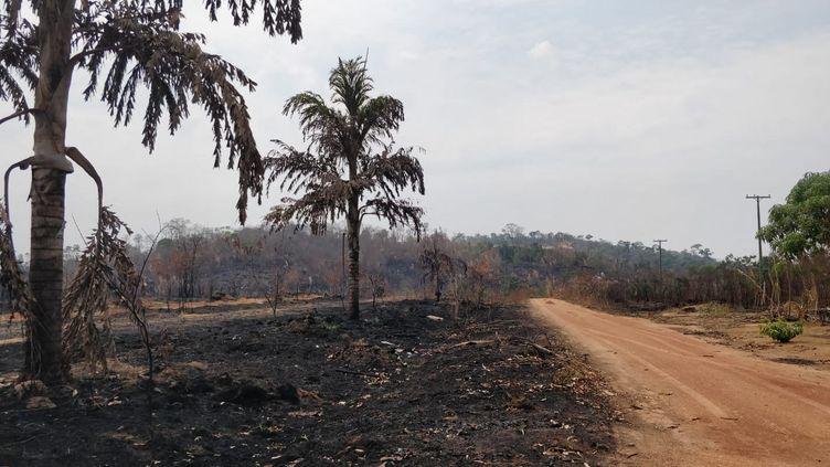 La route BR 364 porte les stigmates des incendies (arbres calcinés, sol noir) en Amazonie dans la région de Rondonia, Brésil. Août 2019 (MATTHIEU MONDOLONI / FRANCEINFO / RADIO FRANCE)