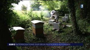 Les apiculteurs s'inquiétent à propos de deux pesticides. (FRANCE 3)