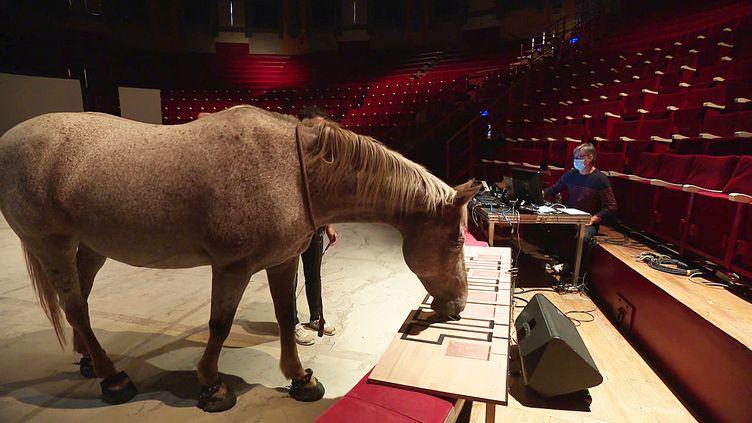 Danse-Hippo-Lab#, un spectacle équestre musical et chorégaphique au cirque Jules Verne d'Amiens (France 3 Hauts de France)