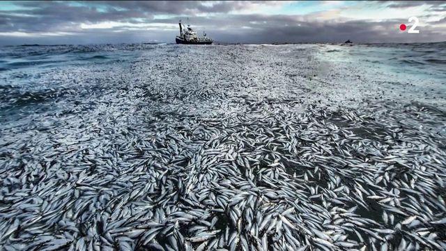 Photo Hebdo : la biodiversité célébrée
