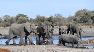 Des éléphants boivent dans ledelta de l'Okavango, dans la périphérie de Maun, au Botswana, le 28 septembre 2019. (MONIRUL BHUIYAN / AFP)