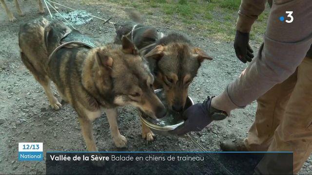 Deux-Sèvres : à la découverte de la vallée avec des chiens de traîneau