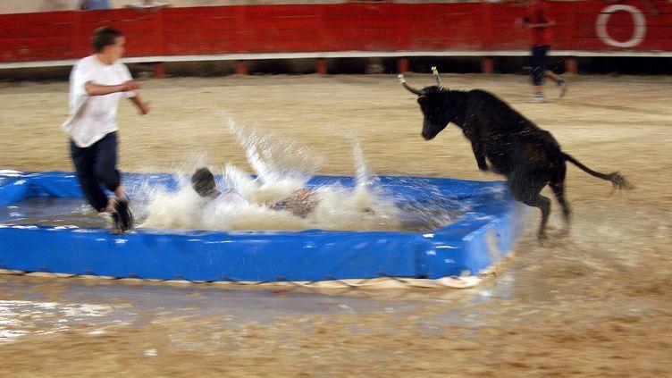 Le taureau-piscine consiste à attirer une vachette ou un taureau dans l'eau. Ici, à Saint-Jean-de-Védas (Hérault) en 2004. (MAXPPP)