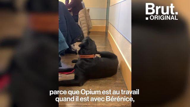 Malvoyante, Bérénice a pu aller pour la première fois au collège accompagnée de son chien-guide, Opium. Brut a suivi cette rentrée scolaire particulière.
