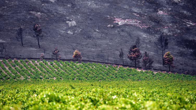 Un champ vierge et des hectares de végétation brûlés dans l'incendie à Orgon (Bouches-du-Rhône), le 26 août 2012. (GERARD JULIEN / AFP)