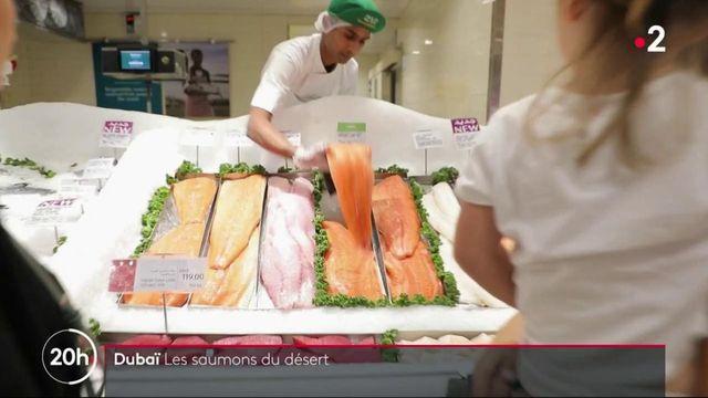 Dubaï : des saumons élevés en plein désert ?