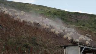 En mars 2018, Nicolas Hulot, le ministre de l'Écologie et de la Transition énergétique, a lancé une consultation publique pour la réintroduction de l'ours dans les Pyrénées. Le résultat est favorable, mais certains éleveurs du Haut-Béarn y sont opposés.