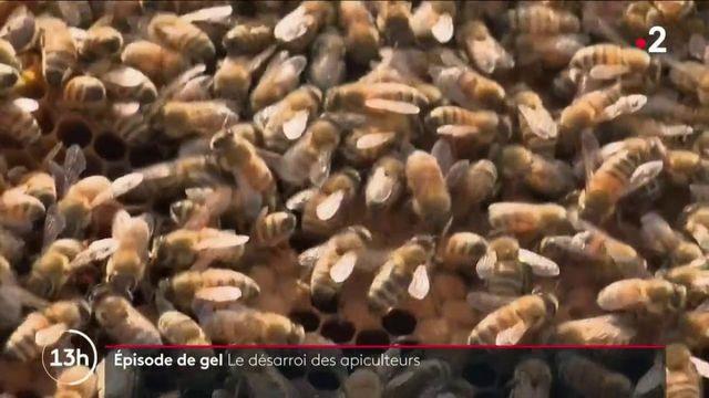 Gel : les apiculteurs dans la tourmente