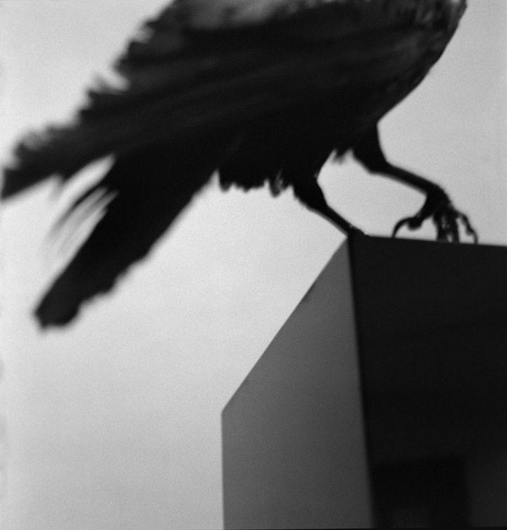 """Alberto García-Alix, """"Monologue avec un corbeau"""", 2011  (Alberto García-Alix – Courtesy the artist, kamel mennour, Paris, et galería Juana de Aizpuru, Madrid)"""