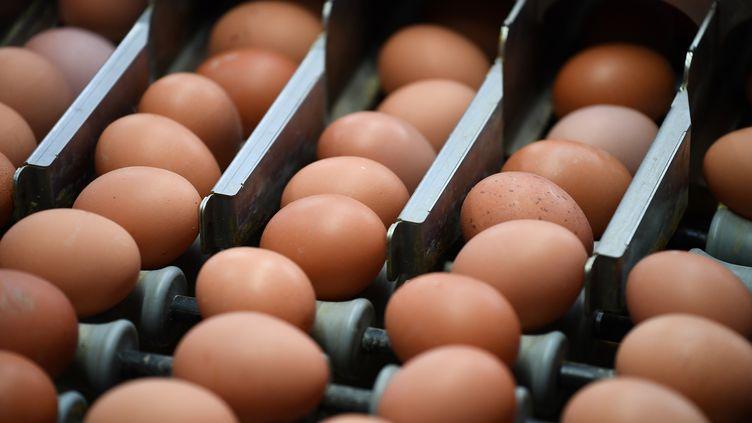 Des œufs dans un élevage de volailles à Namur (Belgique), le 12 août 2017. (JOHN THYS / AFP)