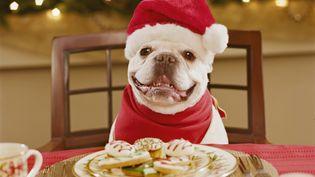 La moitié des propriétaires de chiens américains font un cadeau à leur animal à Noël. ( GETTY IMAGES )
