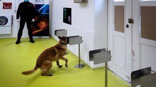 Un policier apprend à son chien à trouver un morceau de tissu infecté par le Covid-19, à Maison-Alfort le 13 mai 2020 (photo d'illustration). (JOEL SAGET / AFP)