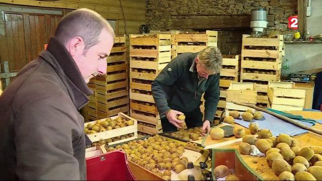 Kiwi : l'exotisme à la française