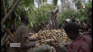 Des enfants prisonniers de la forêt, esclaves dans des plantations de cacao en Côte d'Ivoire (ENVOYÉ SPÉCIAL  / FRANCE 2)
