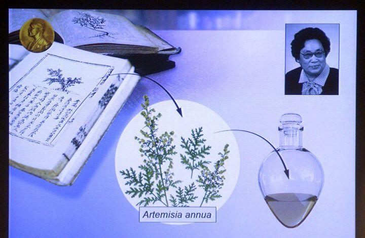Description du processus de recherche qui a conduit à la découverte de l'artémisinine par la chercheuse chinoise Tu Youyou, co-lauréate du Nobel de médecine 2015. (JONATHAN NACKSTRAND / AFP)
