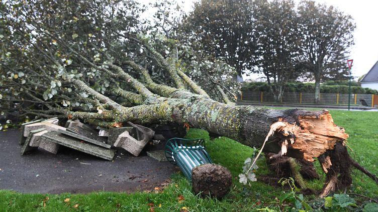Un arbre arraché àPlozévet (Finistère), jeudi 21 octobre 2021. (FRED TANNEAU / AFP)