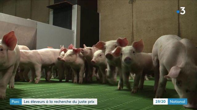 Agriculture : la filière porcine dans la tourmente