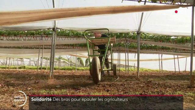 Solidarité : des bras pour épauler les agriculteurs durant l'épidémie