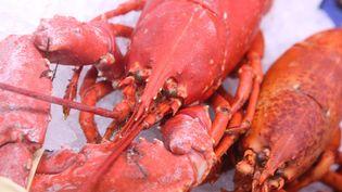 700 kilos de homards congelés ont disparu d'un entrepôt du Havre. (DOM POIRIER / MAXPPP)