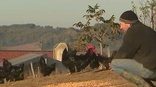 Pour respecter l'authentique recette de la poule au pot, des éleveurs du Gers et des Hautes-Pyrénées ont décidé de relancer l'élevage d'une poule : la Noire de Gascogne. (FRANCE 3)