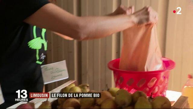 Limousin : le filon de la pomme bio attire consommateurs et cueilleurs