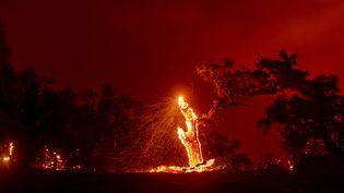 Des braises s'envolent d'un arbre en feu, lors de l'incendie Hennessey dans la région de Napa, en Californie, le 18 août 2020. (JOSH EDELSON / AFP)