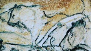 Lionnes peintes sur les parois de la Grotte Chauvet  (DR)