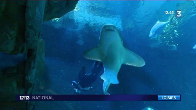 Aquarium de Paris : immersion aux côtés des soigneurs
