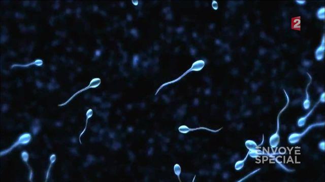 Envoyé spécial. L'étonnant commerce du sperme